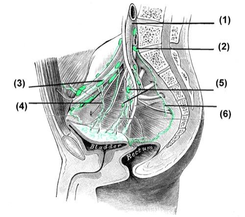 Lymphgefäße Lymphknoten des Beckens