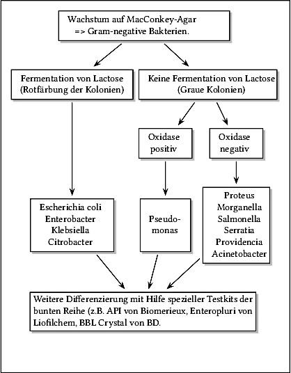 Abbbildung Grobe Eingrenzung der gramnegativen Bakterienart