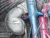 Abb. Nieren im Retroperitoneum