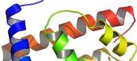 3D Modell von Proteinketten